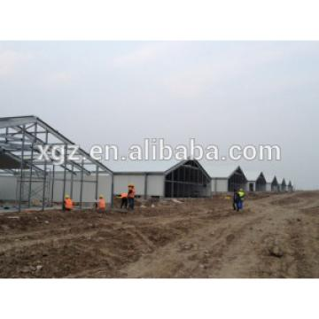 chicken broiler poultry farm