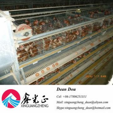 Auto Device Professional Steel Structure Poultry Farm Chicken House Manufacturer