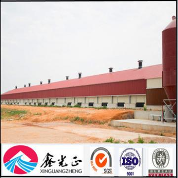Design automatic equipment A type chicken house in poultry farm