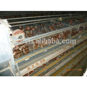 Steel Structure Chicken House Broiler Layer Poultry Farm