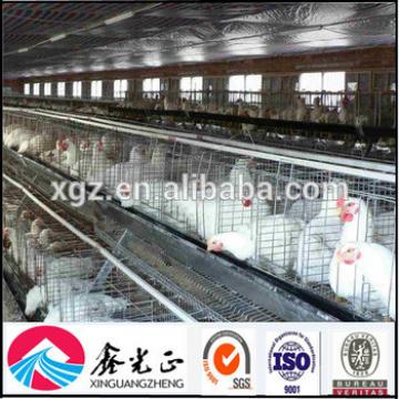 Automatic poultry farming design for layer chicken poultry house
