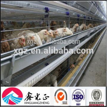 Professional Design Chicken Egg Poultry Farm