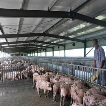 Prefab Steel Structure Low Price Advanced Automated Piggery