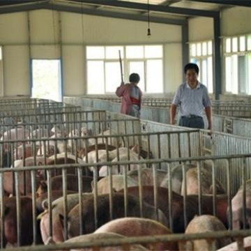 Advanced Automated Low Price Steel Structure Pig Farm Design