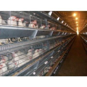prefab automated poultry farm products