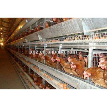modern steel structure automatic poultry structure construction for layer chicken shed