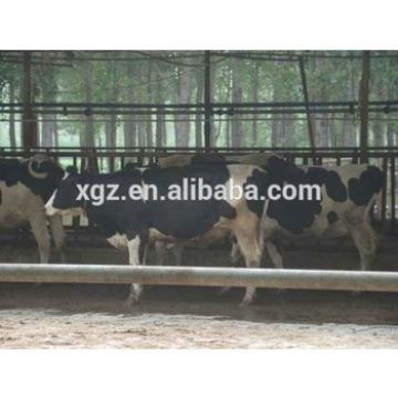 Steel frame prefab cowshed