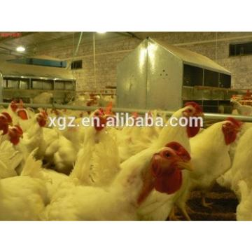 cheap advanced automatic building poultry house for 10000 chickens