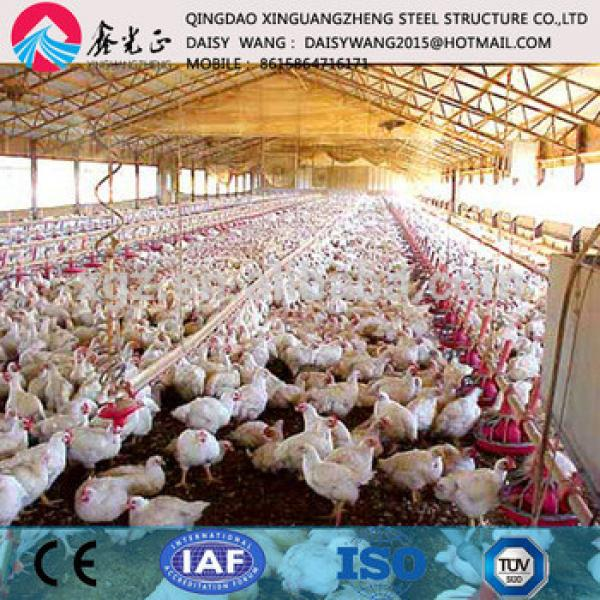 China made low cost rear equipments and steel poultry house #1 image