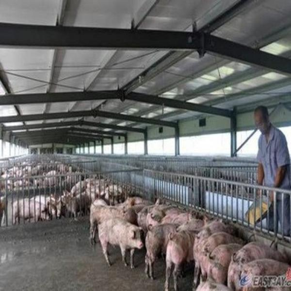 Prefab Steel Structure Low Price Advanced Automated Piggery #1 image