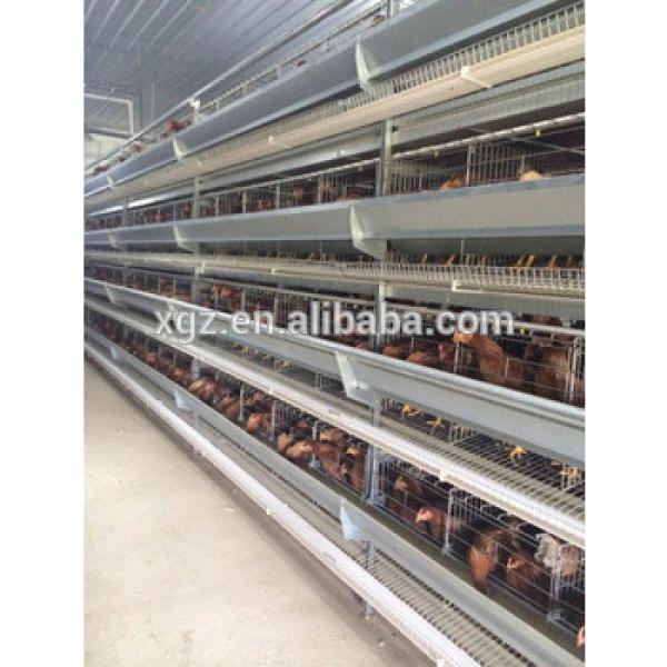 Layer poultry farming house and equipment design #1 image