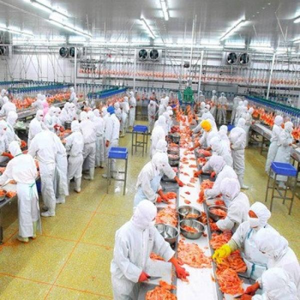 China Light Construction Design Prefabricated Full Eggs Meat Factory #1 image