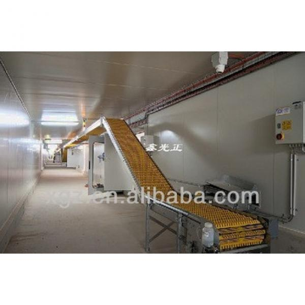 best price automatic layer chicken poultry shed with eggs in algeria #1 image