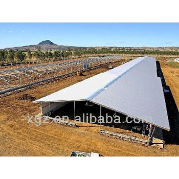 modern best price breeding farm chicken for sale in algeria #1 image