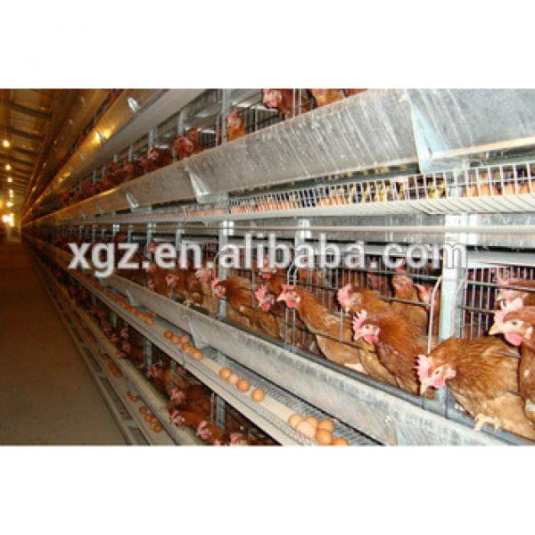 cheap advanced automated chicken layer farm #1 image
