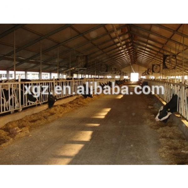 modern specialized cow cattle farm #1 image